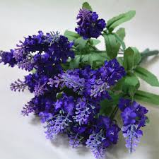 compare prices on lavender bushes online shopping buy low price