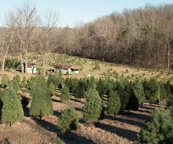 cut down your own christmas tree at these three spots 417