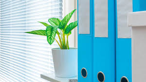 Plants That Don T Need Natural Light by Bbc Capital Why You Can U0027t Afford To Ignore Nature In The Workplace