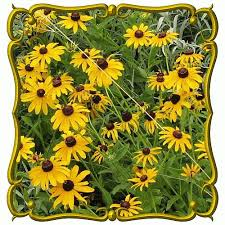 136 best wv native plants for butterflies not deer images on