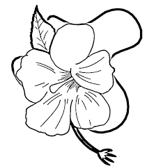 coloring pictures of hibiscus flowers hibiscus flower coloring page hibiscus coloring page hibiscus flower