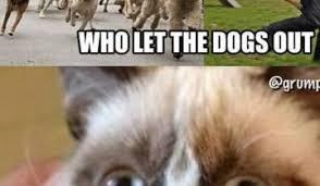 Star Wars Cat Meme - funny cat star wars memes daily funny memes