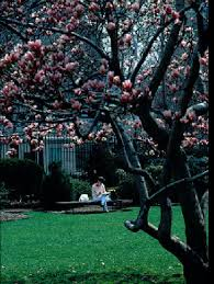 tbt the roots of barnard s magnolia tree bwog