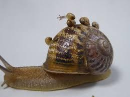 strange snail love triangle leaves u0027lefty u0027 jeremy without a partner