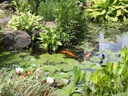 how to design a fishpond hgtv