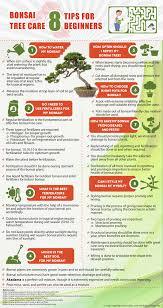 bonsai tree care 8 tips for beginners small garden ideas
