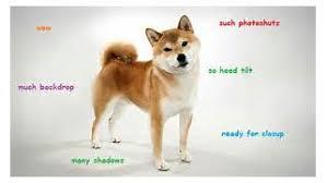 Top Doge Memes - dog meme wow meinafrikanischemangotabletten