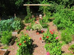 cool best mulch for vegetable garden minimalist for architecture