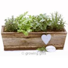 herb planter boxes 32 best pallet window boxes images on pinterest window boxes