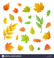 big set of cute leaves from different kind of trees isolated on