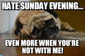 Sad Pug Meme - best meme pug meme and dog