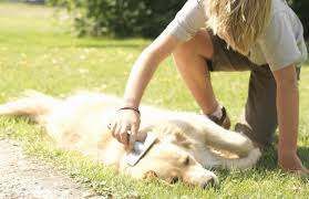 Do All Short Haired Dogs Shed by Why Dogs Shed And How To Reduce Shedding In Dogs