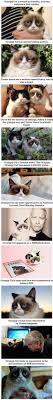 19 Best Grumpy Cat My - 19 best manx cats and pixie bobs images on pinterest kitty cats