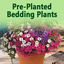 Plant Delivery Jersey Plants Direct Delivering Quality U0026 Value