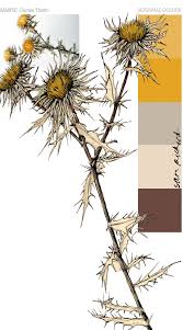 planet sam colour from the season carline thistle yellow