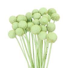 billy balls green wholesale craspedia balls
