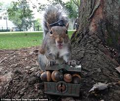 Dramatic Squirrel Meme - penn state s squirrel whisperer mary krupa is still at it four