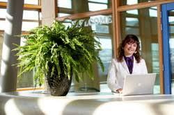 plantes bureau les bienfaits des plantes vertes au bureau ou dans votre appartement