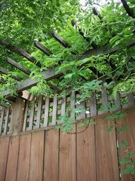 60 cheap diy privacy fence ideas diy privacy fence and privacy