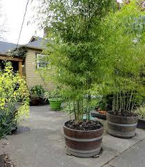 great alternative to a regular garden wall covering best ideas on