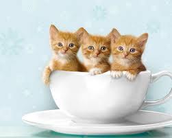 25 cute cats photos ideas cute kitty cats