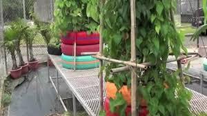 las gomas en huertos urbanos jardineria pinterest gardens