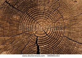 wood tree rings images Tree rings old weathered wood texture stock photo royalty free jpg
