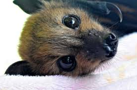 small bat all about bats investigations in agro ecology