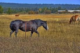 file horses in sunriver oregon jpg wikimedia commons file horses in sunriver oregon jpg