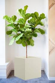Modern Hanging Planters 94 Best Hanging Planters Images On Pinterest Hanging Planters