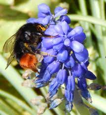 Flowers Bees Pollinate - flower pollination and pollination syndromes