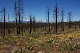 native plant salvage resilient to salvage logging after severe wildfire