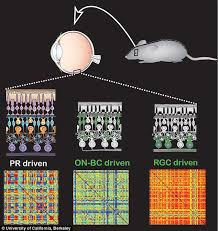 Cure For Night Blindness Gene Therapy That Restores Sight In Mice And Dogs Could Be Used On