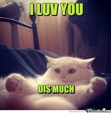 I Love You This Much Meme - i love you this much cat meme ma