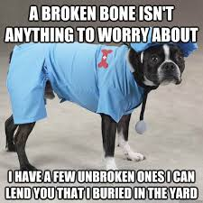 Dog Doctor Meme - a broken bone isn t anything to worry about i have a few unbroken