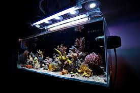 reef tank lighting schedule how to mix and match reef aquarium light bulbs to achieve the right