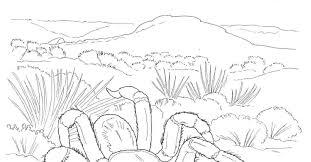 download desert coloring pages bestcameronhighlandsapartment com