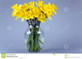 daffodils in a vase royalty free stock photography image 613737