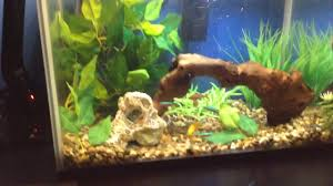 Tropical Fish Home Decor Pets At Home 24 Litre Tropical Fish Tank Set Up Youtube