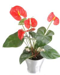 health benefits of houseplants hgtv