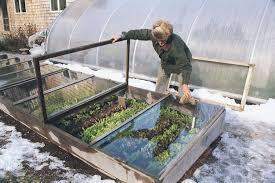 Backyard Greenhouse Winter Cold Frame Gardening Vegetable Gardener