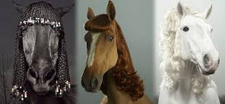 hairstyles for horses cfz daily news horse hairstyles are the mane attraction