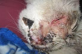 Keep Cats In Backyard Horrific U0027outside Cat U0027 Stories Updated May 2017 Peta