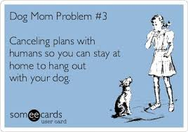 Dog Mom Meme - philosophy of dog on twitter it might just be me but i don t