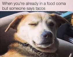 Food Coma Meme - 32 funny memes and pictures of the day funny memes funny pictures