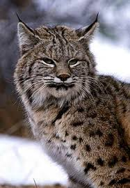 Oppose massachusetts department of fisheries and wildlife 39 s dfw