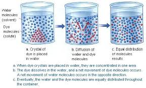 diffusion and osmosis awbionotes
