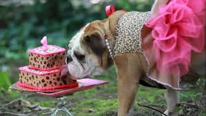 dog birthday party how to throw a dog birthday party angie s list