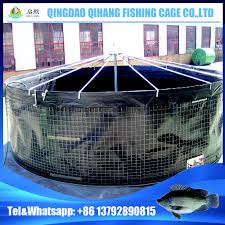 tilapia tanks tilapia tanks suppliers and manufacturers at