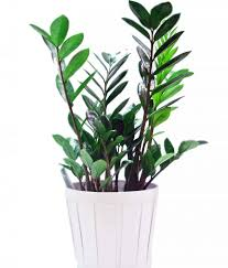 10 houseplants that dont need sunlight 106 best tropical house